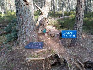 Fairy Woods at Loch Garten