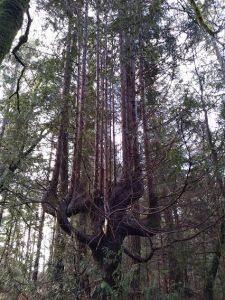 Tree on Great Glen Way