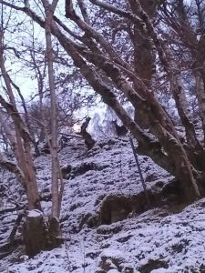 Deer hiding in the woods above True North Lodge