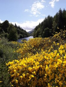 Summer on the Caledonian Canal